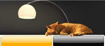 котик в блоге Шакина
